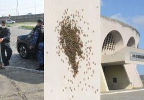 Ataque de abelhas interrompe vacinação contra a Covid-19 em João Pessoa; veja