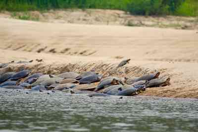 Você sabe como as tartarugas se comunicam? Ouça o som