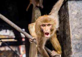 Idoso de 72 anos é morto apedrejado por macacos