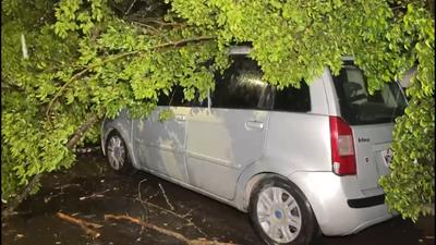 Chuva derruba árvore sobre carros no Jardim Planalto