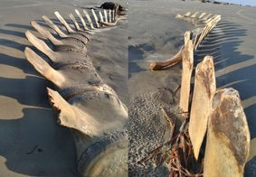 esqueleto de baleia é encontrado em São Paulo