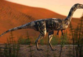 Dinossauro brasileiro descoberto andava como cavalo e tinha garra
