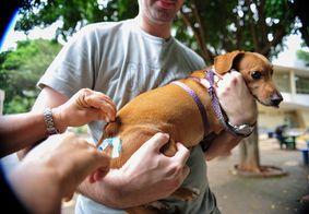 Paraíba terá Dia D de vacinação contra a raiva animal