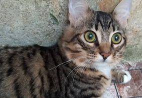 Veja quais são os benefícios de ter gatos em casa