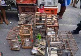 Operação apreende mais de 70 aves em Campina Grande, na PB