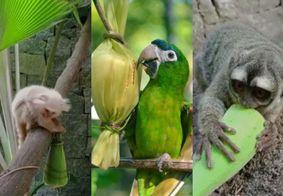 Animais de Parque Zoo de João Pessoa se alimentam em clima junino; veja