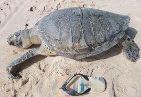 Mais de 20 tartarugas marinhas foram encontradas mortas em praias da PB em 2019