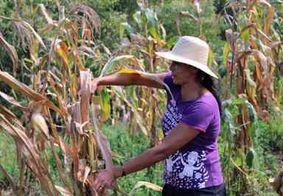 Protagonismo da mulher na agricultura cresce no Brasil, aponta Censo