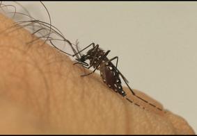 """Médica alerta para """"explosão"""" de casos de Zika e teme novos registros de microcefalia"""