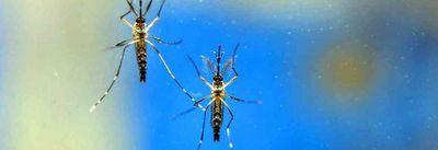 Paraíba pode ter surto de dengue em 2020, segundo Ministério da Saúde