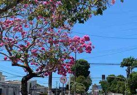 Confira a previsão do tempo para o primeiro dia da primavera na Paraíba