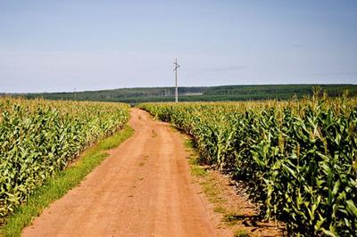 Comissão vai debater etanol de milho no Centro-Oeste brasileiro