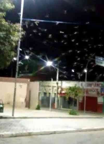 Vídeo de gafanhotos invadindo cidade da Paraíba é fake, diz especialista