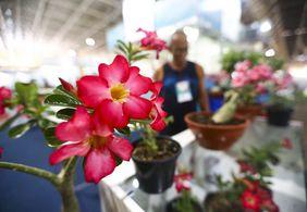 Diferença nos preços de flores pode chegar a R$ 230 em JP; veja