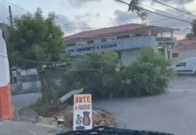 Queda de árvore deixa cabos espalhados por via pública em João Pessoa