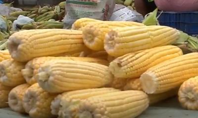 Quanto custa a mão de milho em João Pessoa?