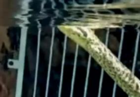 """Menino se depara com sucuri dentro de piscina em Rio Quente: """"Traumático"""""""