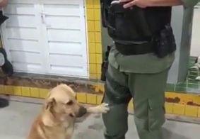 Vídeo: cachorro 'caramelo' pede carinho a PM e viraliza nas redes sociais