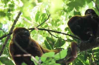 Febre Amarela: mesmo com campanhas informativas, pessoas estão matando macacos