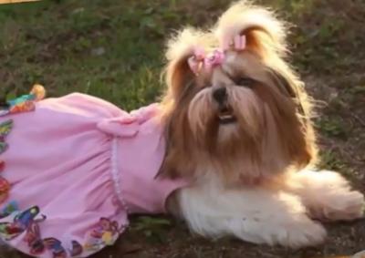Dog Influencer: Conheça a cadela blogueira faz sucesso na internet