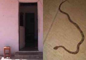 Mulher morre após ser picada por cobra jararaca no interior da PB