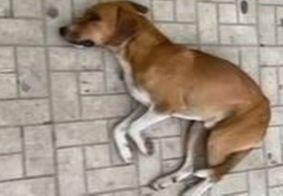 Depois de esperar o dono, que morreu em uma UPA, cachorro ganha novo lar