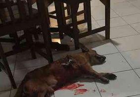 Entidade pede investigação sobre morte de cachorro esfaqueado na Paraíba