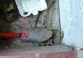 Menino de um ano é socorrido ao tentar engolir cobra venenosa