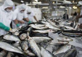 Estado do NE é líder em exportação de peixes e crustáceos