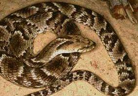 Criança de quatro anos é atacada por cobra no interior da Paraíba