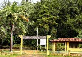 Pesquisadores paraibanos apontam que floresta nativa leva mais de três décadas para se regenerar