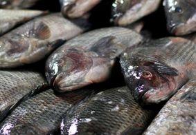Preço do quilo do peixe tem variação de até 200% em João Pessoa