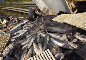 Vídeo: Caminhão colide com mureta e espalha 4,5 toneladas de peixe na BR-101