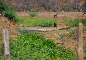 Rio Paraíba seco na zona rural do Cariri paraibano