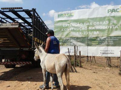 PRF pede ação integrada com municípios para recolhimento de animais nas rodovias
