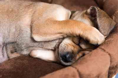 Saiba como deixar os cães mais calmos durante a queima de fogos do Ano Novo