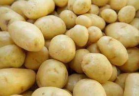 Pesquisadores da UFPB criam produto à base de batata inglesa para tratar úlcera gástrica