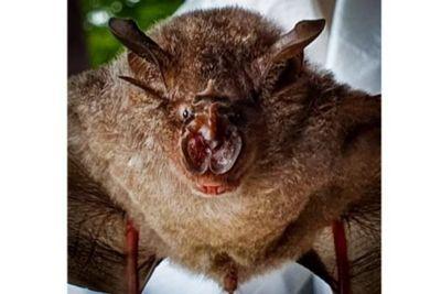 Veja o que se sabe sobre o coronavírus encontrado em morcegos na Tailândia