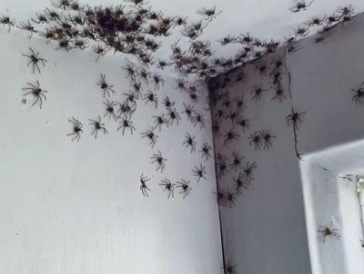 Mãe grava vídeo impressionante de invasão de aranhas no quarto da filha