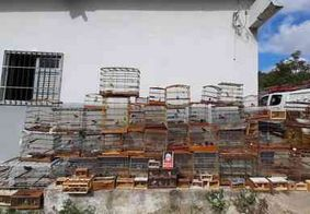 Mais de 100 aves silvestres são apreendidas em feira livre na PB