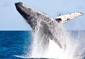 Mergulhador é surpreendido por baleia Jubarte enquanto pescava