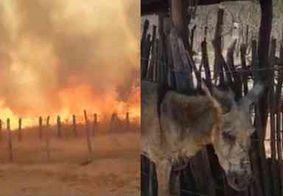 Série de incêndios assusta e mobiliza moradores para salvar animais na PB