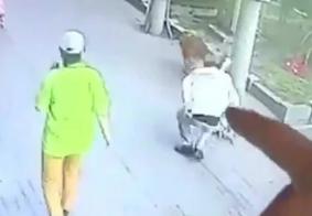 Vídeo: gato cai de prédio, deixa idoso inconsciente e é encurralado por cão