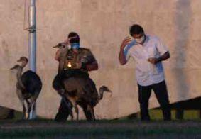 Bolsonaro é atacado por ema ao tentar alimentá-la no Palácio da Alvorada; veja