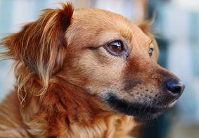 Animais desenvolvem anticorpos contra o novo coronavírus