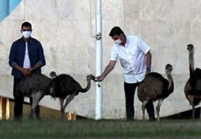 Em cruzada pela cloroquina, Bolsonaro mostra remédio às emas do Alvorada