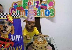 Cachorro ganha festa surpresa de aniversário; veja a reação
