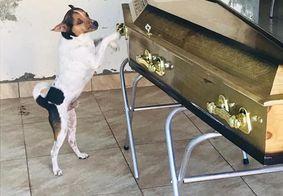 No início do funeral, oanimalzinho 'Toy' não deixava ninguém se aproximar do caixão.