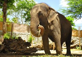 Santuário de elefantes publica 'Antes e Depois' de Lady e evolução impressiona; veja