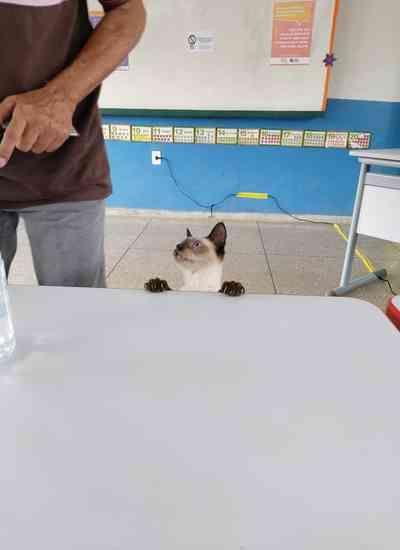 """Gata rouba cena ao """"votar"""" em seção em Porto Velho"""